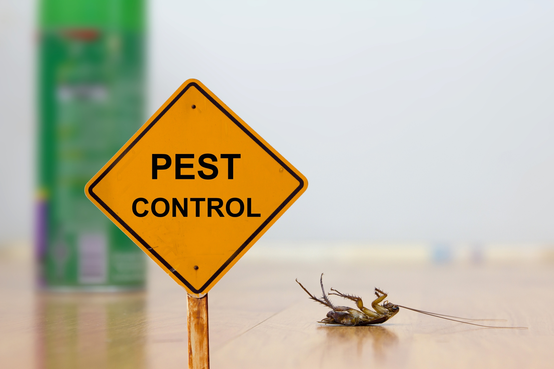 24 Hour Pest Control, Pest Control in Highbury, N5. Call Now 020 8166 9746
